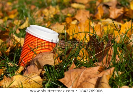 Garçon jaune laisse jardin central Photo stock © Traven