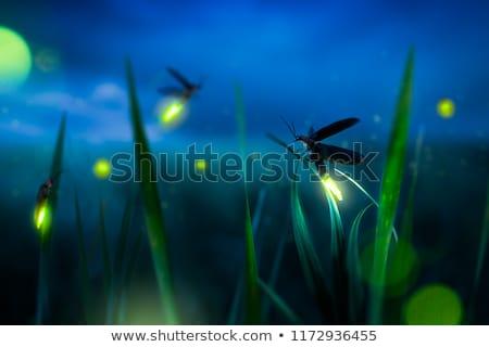 Luciole feuille jaune lueur Photo stock © macropixel