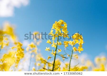 Bulutlar mavi gökyüzü beyaz bahar yaz Stok fotoğraf © samsem