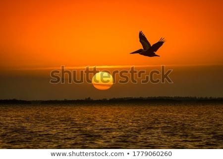 Stock fotó: Fehér · madár · fű · állat