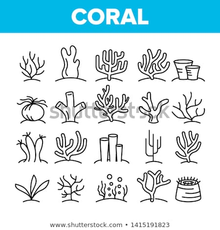 vector icon coral stock photo © zzve