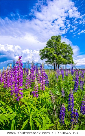 Rural scene with flowers Stock photo © zzve
