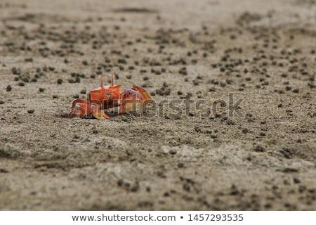 deniz · kabuk · yengeç · plaj · sabah · ada - stok fotoğraf © zhekos