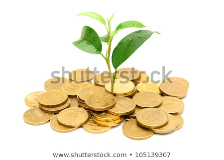 gold coins and plant isolated on white Foto stock © oly5