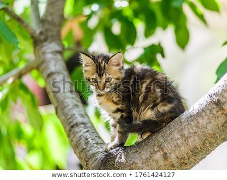 ストックフォト: 子猫 · 登山 · ツリー · 自然 · 猫 · 庭園