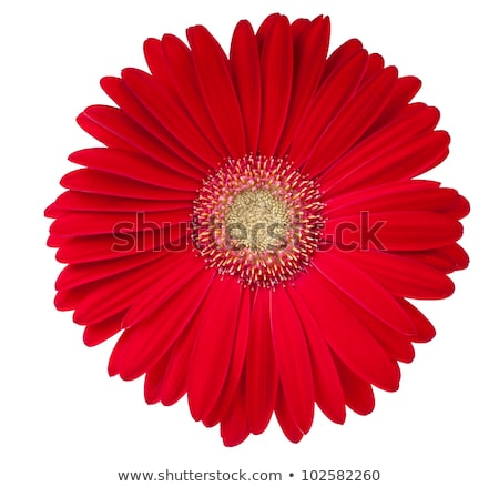 centro · rojo · flor · resumen · arte · color - foto stock © shihina