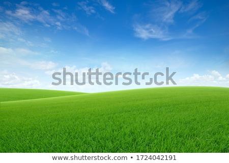 Gyönyörű tájkép mező zöld fű dombok felhők Stock fotó © Geribody