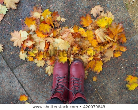 Colorful autumn leaves arranged as a single maple leaf Stock photo © Smileus