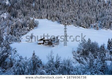 Trentino - park in Vermiglio Stock photo © Antonio-S