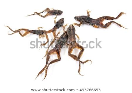 kurbağa · yalıtılmış · beyaz · kalp · kan · cilt - stok fotoğraf © supersaiyan3