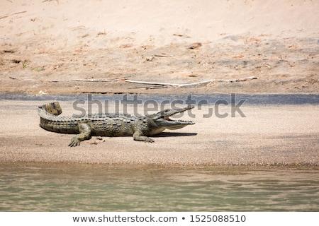 Krokodyla rzeki banku wody asia Nepal Zdjęcia stock © dutourdumonde