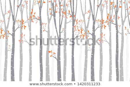 Birch tree forest, vector Stock photo © beaubelle