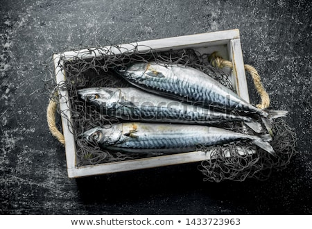 Raw mackerel Stock photo © Digifoodstock