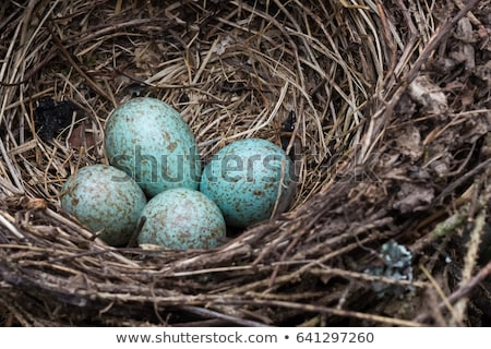 uccelli · nido · uova · macro · shot · due - foto d'archivio © adrenalina