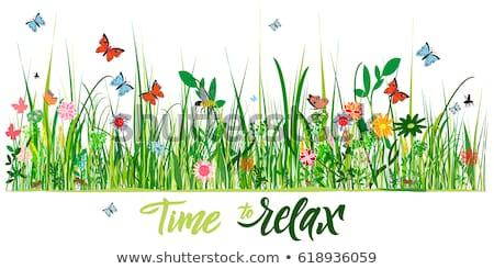 Woord insecten verschillend bladeren illustratie natuur Stockfoto © bluering