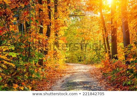 Vibrante caída follaje amarillo Inglés nuez Foto stock © neirfy