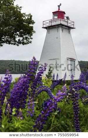Belyeas Point Lighthouse in New Brunswick Stock photo © benkrut