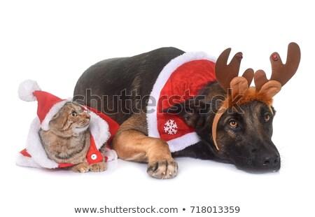 Noël · chat · chaton · chapeau - photo stock © cynoclub