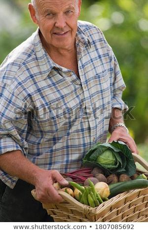 Idős férfi tart friss cukkini zöldség Stock fotó © wavebreak_media