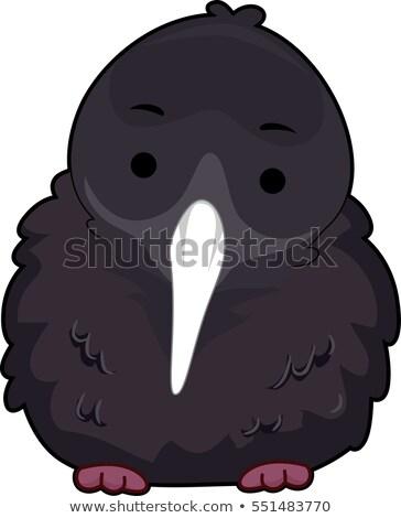 любопытный киви птица пушистый Cute Сток-фото © lenm