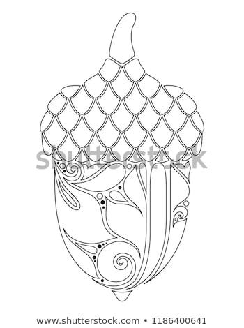 Monocromático decorativo bolota cair planta floral Foto stock © lissantee