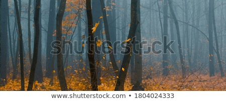 beautiful trees on alley in autumn stock photo © artush