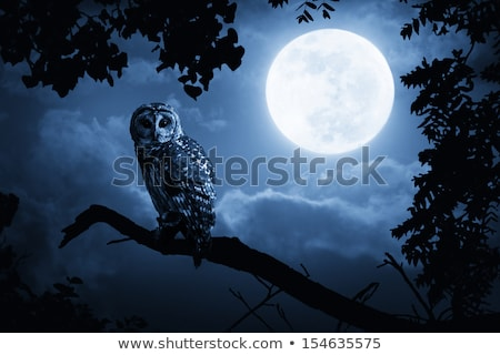 Chouette nuit illustration bois nature lune Photo stock © bluering