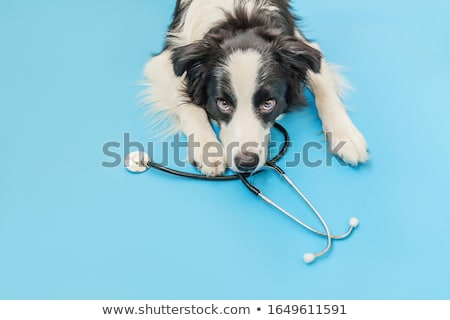 Veterinarian examining dog with stethoscope stock photo © Kzenon