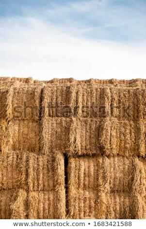 わら · 麦畑 · 青空 · 空 · 草 · 背景 - ストックフォト © imaagio