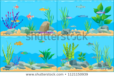 Multicolored Sea Animals, Water Plants and Stones Stock photo © robuart