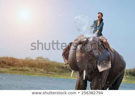 Girl washing an elephant. Stock photo © NeonShot