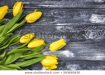 beautiful yellow tulips on black rustic wooden background top view stock photo © dash
