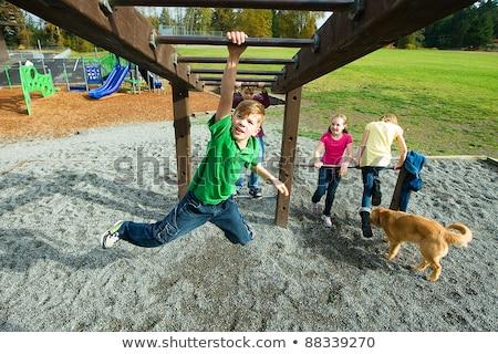 猿 演奏 遊び場 実例 ツリー 自然 ストックフォト © colematt
