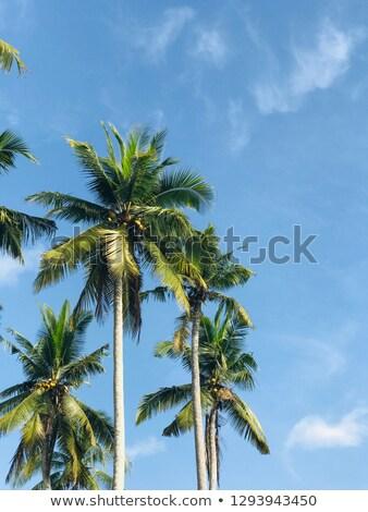 Tropicales palmeras bali isla Indonesia vista Foto stock © boggy