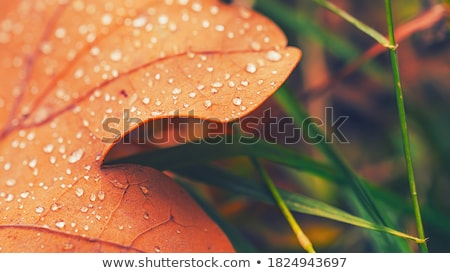 Abstract colorful gel sheets texture Stock photo © lunamarina