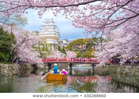 Japonya görmek Asya Bina çiçekli sakura Stok fotoğraf © robuart