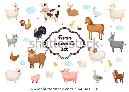 ram farm animal cartoon character Stock photo © izakowski