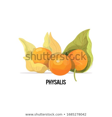 Fruits of Physalis Stock photo © newt96