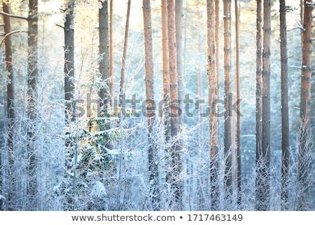queda · de · neve · inverno · floresta · nevasca · folha · neve - foto stock © Mikko