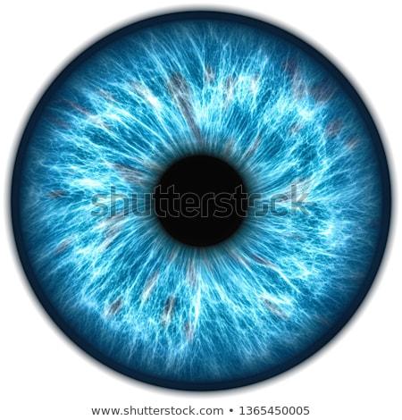 аннотация · цветочный · Iris · рисованной · белый - Сток-фото © perysty