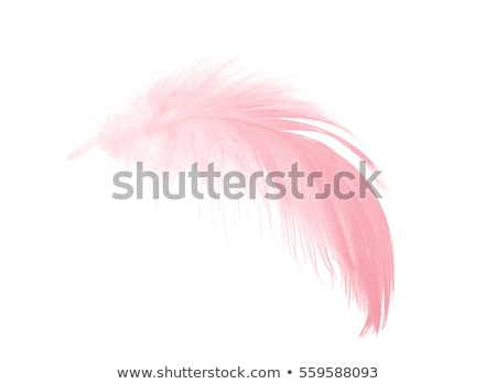 Pink Feathers stock photo © charcoal