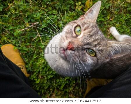 kat · hek · boom · katten · huisdier - stockfoto © ca2hill