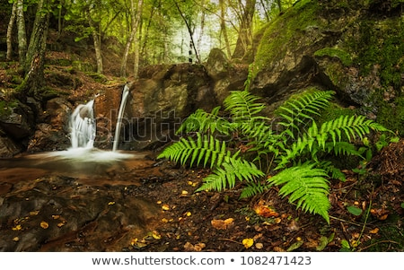 Small waterfall in the woods Stock photo © jaymudaliar