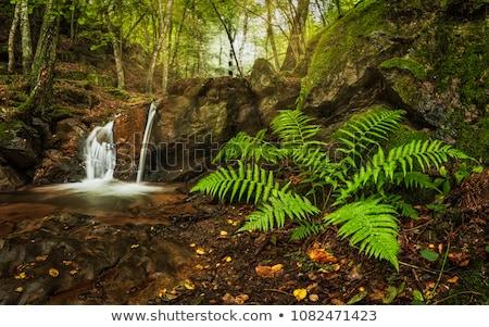 pequeno · cachoeira · mata · água · cair · árvore - foto stock © jaymudaliar