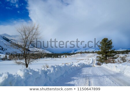 kar · aşağı · sokak · yol · ev · kamyon - stok fotoğraf © saje