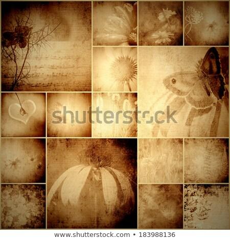Kolaż album charakter kwiaty Motyl vintage Zdjęcia stock © marimorena