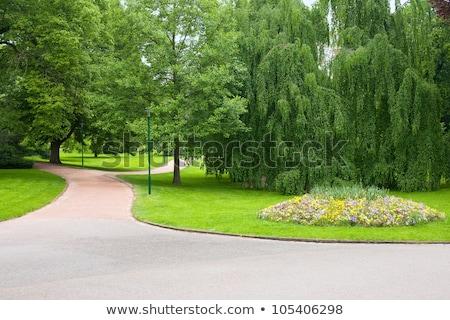 belle · concrètes · luxuriante · herbe · verte - photo stock © feverpitch