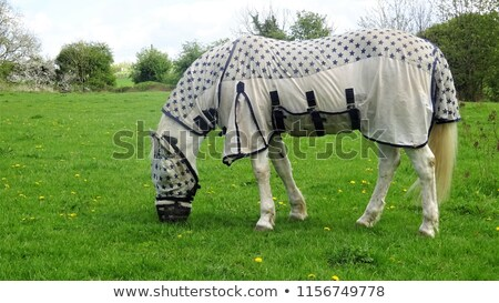 skewbald horse grazing in a fly mask stock photo © rogerashford