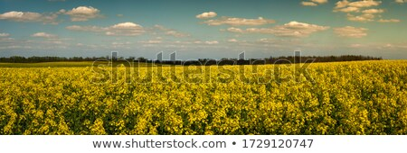 Stock fotó: Panoráma · kék · ég · arany · mező · virág · fa