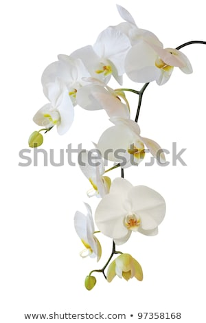 黃色 · 蘭花 · 花 · 木 · 背景 · 美女 - 商業照片 © tetkoren
